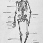 the-human-skeleton-1380377-m